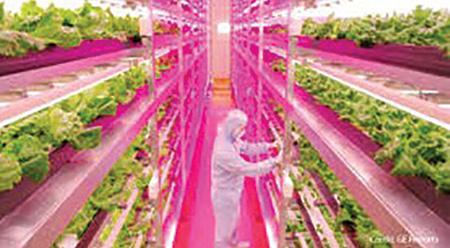 Plant Factory ผลิตพืชภายใต้สภาวะควบคุม