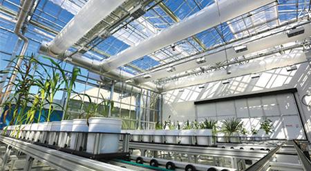 Phenomics Greenhouse เพื่อเก็บข้อมูล การตอบสนองต่อสภาวะแวดล้อมของพืชสำคัญ